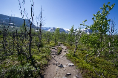 The Kärkevagge hiking trail with mount Vassijaure in the background.