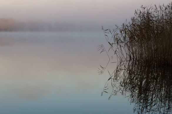 A calm, misty lake at dawn