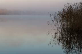 Silhuetten av en vassrugg speglar sig i en dimmig sjö