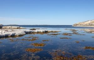 Klippor, hav och tång vid Norrpada, Stockholms skärgård