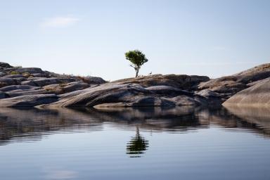 Ensamt träd på en kobbe i Rödkobbsfjärden, Stockholms skärgård