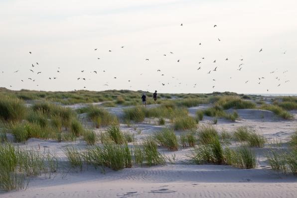 Två killar promenerar bland sanddynerna vid Bredsandsudde på Gotska Sandön