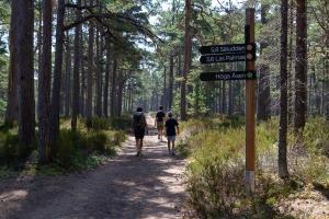 Tre personer vandrar längs en skogsväg på Gotska Sandön