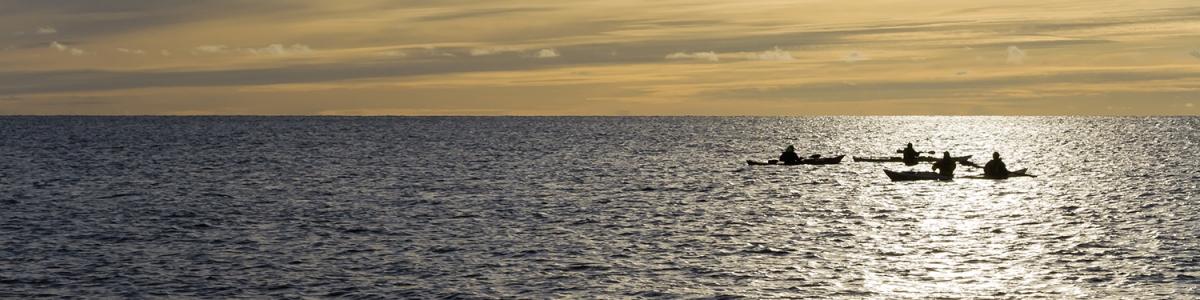 Silhuetter av fyra kajakpaddlare i ett glittrande hav med horisonten och en vacker himmel i bakgrunden