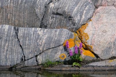 Fackelblomster och amfibolit i Gryts skärgård
