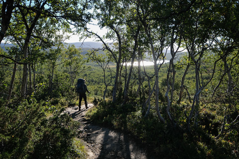 Fjällvandrare går stig genom fjällbjörkskog i Kesudalen, Härjedalen